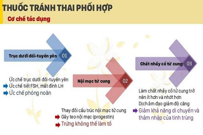 co-che-tac-dung-cua-thuoc-tranh-thai-ket-hop